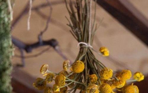 Cómo Secar Flores Métodos Alternativos Floraqueen Es Como Secar Flores Secado De Hierbas Flores Secas Decoracion