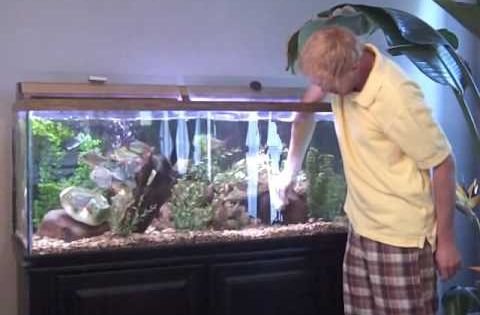 How to clean a fish tank aquarium part 1 animals and for How to properly clean a fish tank