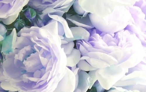 I love both lavender and peonies...yes please! Beautiful lavender peonies. I have