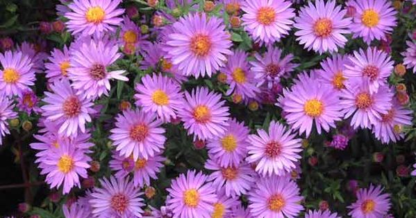 Top 10 plants for clay soil slow draining clay soil for Soil not draining