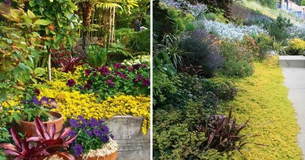 Plantes couvre sol croissance rapide dans le jardin moderne gardens for Comarbuste couvre sol croissance rapide