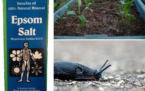 How To Use Epsom Salt In Your Garden Gardening
