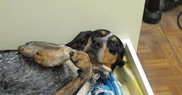 Adopt Minnie On With Images Dog Adoption Homeless Pets Dogs