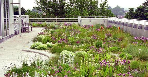 Planting a new perspective noel kingsbury piet oudolf for Kingsbury garden designs