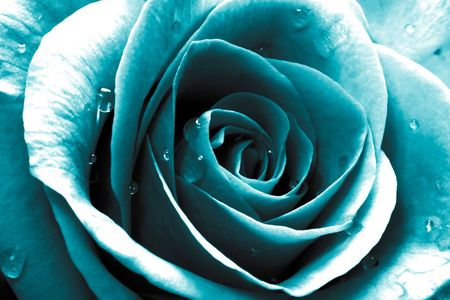 Pin By P Nk E Dungan On My Turquoise Blue Rose Tattoos Turquoise Floral Wallpaper Blue Roses Wallpaper Coolest flower turquoise wallpapers