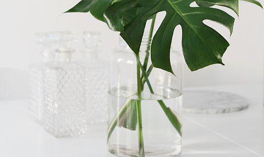 Pin by sherry schuster on craft ideas pinterest for Stylische zimmerpflanzen