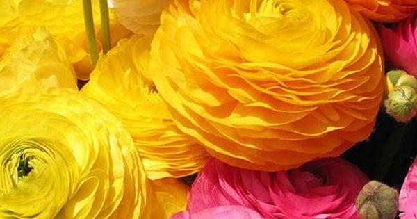 essential guide seasonal wedding flowers
