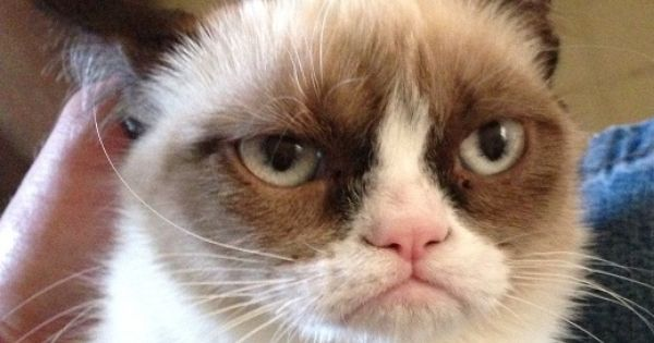 The photo that made Grumpy Cat famous!