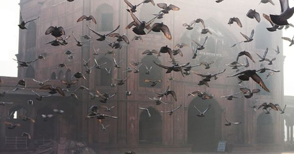 Birds in Flight | Magical Photo