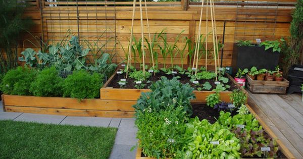 Edible Gardens in Raised Beds