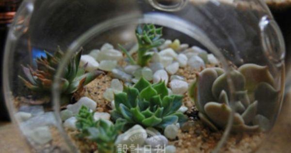 Succulents! by weibo.com/shejirikan