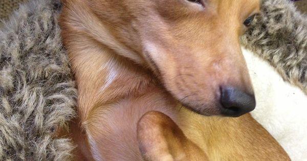 pets Picasso Dog Deformed Face