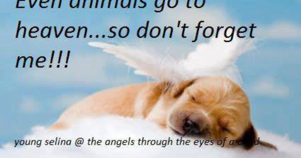 They Will Be Meeting You In Heaven Too Dog Angel Pet Loss Quotes Dog Quotes