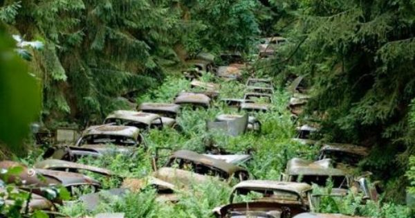 These abandoned cars (in the Ardennes Forest) once belonged to American service men.