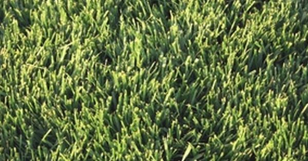 how to fix a lawn that is overrun with weeds and crabgrass