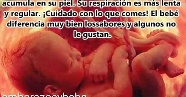 Embarazo Semana A Semana Despejando Dudas Embarazo