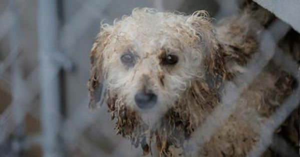 Dogs This Story Brings Tears To My Eyes How On Earth Are Puppy Mills Legal In Arkansas There Aren T Even Any Laws Regulating Puppies Puppy Mills Rescue Dogs