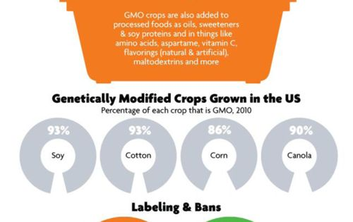 Info graphic just showing some facts on the production of GMO foods.