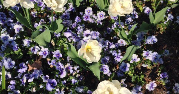 Kontraste Botanischer Garten Flora Garten