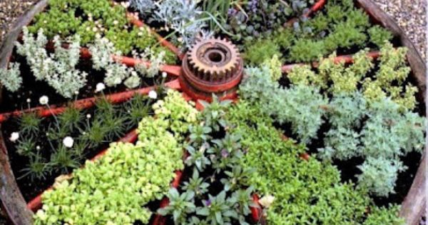 Old wagon wheel. Herb Garden Idea!