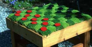Jeepers Creepers Ground Cover That Can Be Walked On Ground Cover