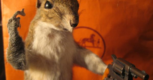 Taxidermy Ftw Shooting Squirrel Gun Amp Middle Finger