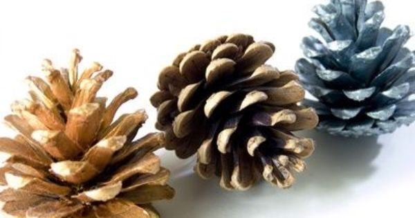 Pre k pine cone craft ideas things to make pinterest for Things to make with fir cones