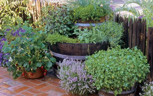 Chives, winter savory, thyme, basil, oregano, tarragon and sage fill these containers