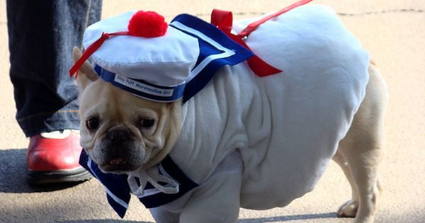 In The Navy Dog Halloween Costumes Dog Halloween Dog Costumes