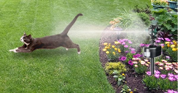 How To Keep Cats Out Of Your Garden Wonder If This Would