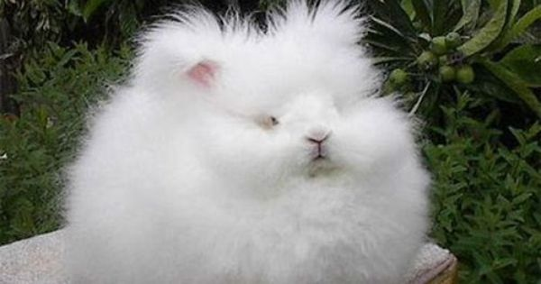 @Sage Miller, I think this is a bunny but it's hard to