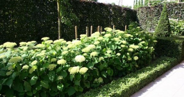 pretty contrasts buxus taxus and hortensia arborescens. Black Bedroom Furniture Sets. Home Design Ideas