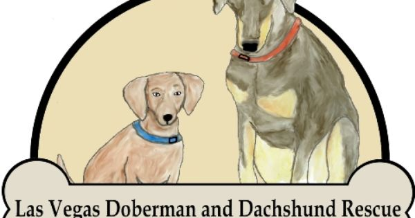 Adopt Support And Donate This Non Profit Rescue Has Been Serving The Doberman And Dachshund Community For Over 10 Ye Dachshund Rescue Doberman Dog Adoption
