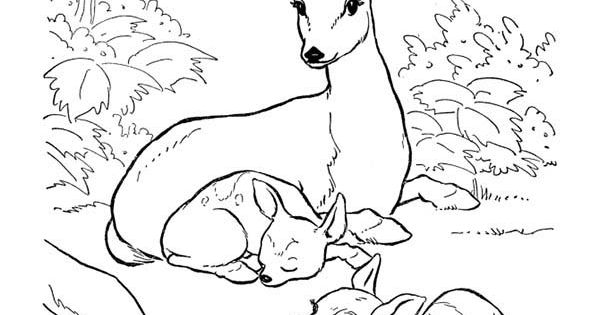 Deer, Deer Mother and Her Two Fawns Coloring Page deer