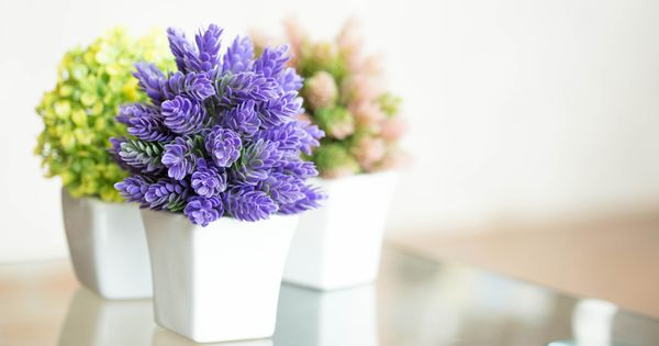 Delighful Flowering House Plants Purple The 16 Prettiest And Most Colorful Indoor With Decor