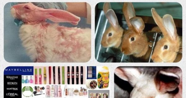 animal testing should no longer be used Animal rights basics use these resources to learn the basic tenets of animal rights,  animal rights and the ethics of testing list the top 11 animal rights issues.