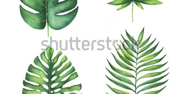 Set Of Green Tropical Palm Leaves Watercolor Illustration