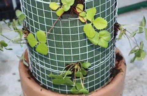 Conseil jardinage permaculture et lectro culture bric for Conseil jardinage