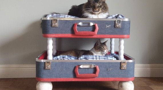 cute kitty bunk bed! Or just one old suitcase for one pet's