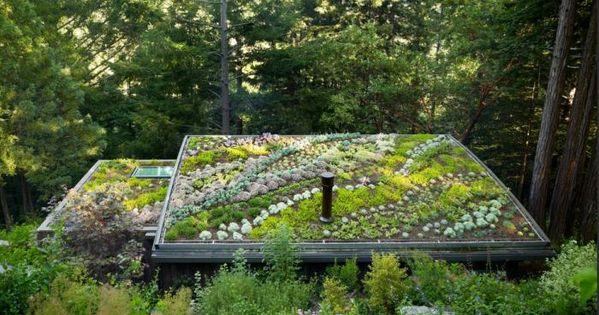 living roof . landscape architect jori hook . feldman architecture's cottages in