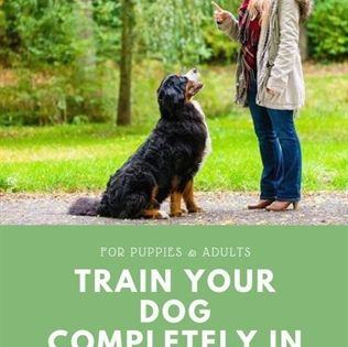 Dog Training Schools Dog Training Over Excited Dog Training