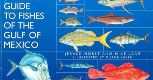 Angler 39 s guide to the fishes of the gulf of mexico best for Types of fish in the gulf of mexico