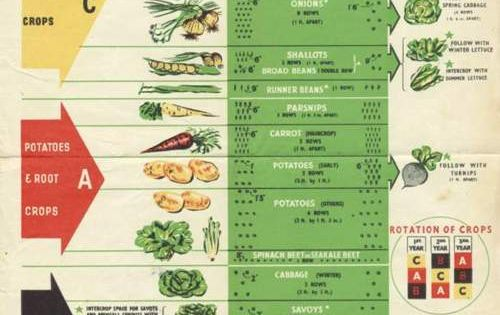 love this! Vintage crop rotation poster for victory gardens
