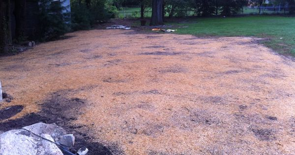 Planting Grass Seed In The Fall Cover With Hay