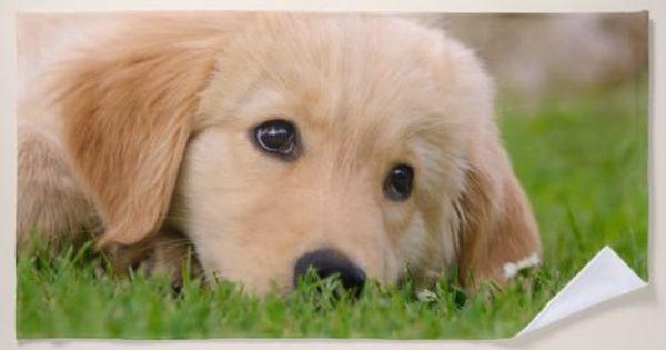 Golden Retriever Cute Puppy Dreams Dog Head Photo Beach Towel