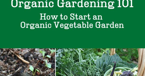 Organic Gardening 101  How to Start an Organic Vegetable Garden