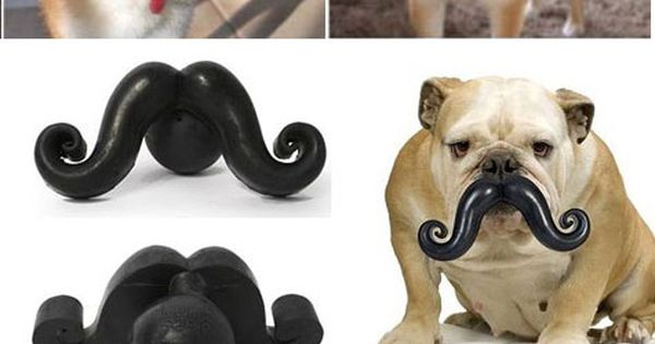 Best chew toys ever!