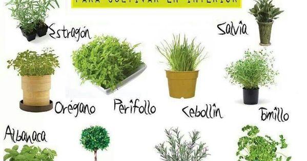 Hierbas de olor para cultivar en el interior gardens for Tipos de hierbas medicinales