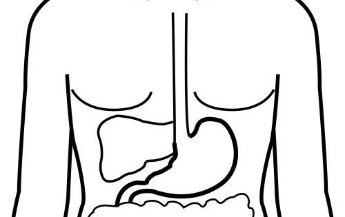 Esophagus Coloring Page Coloring Pages