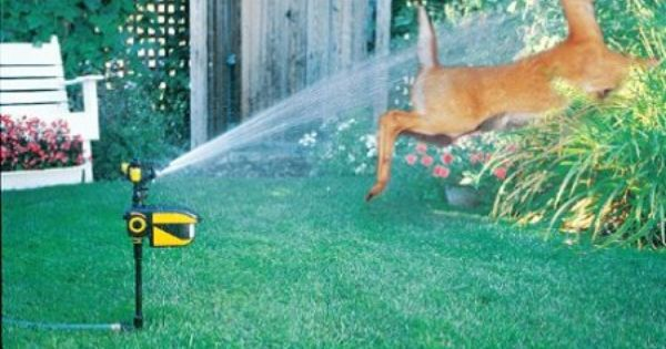 A Motion Activated Sprinkler To Keep Away Animals Scarecrow Sprinkler Motion Activated Sprinkler Deer Repellant